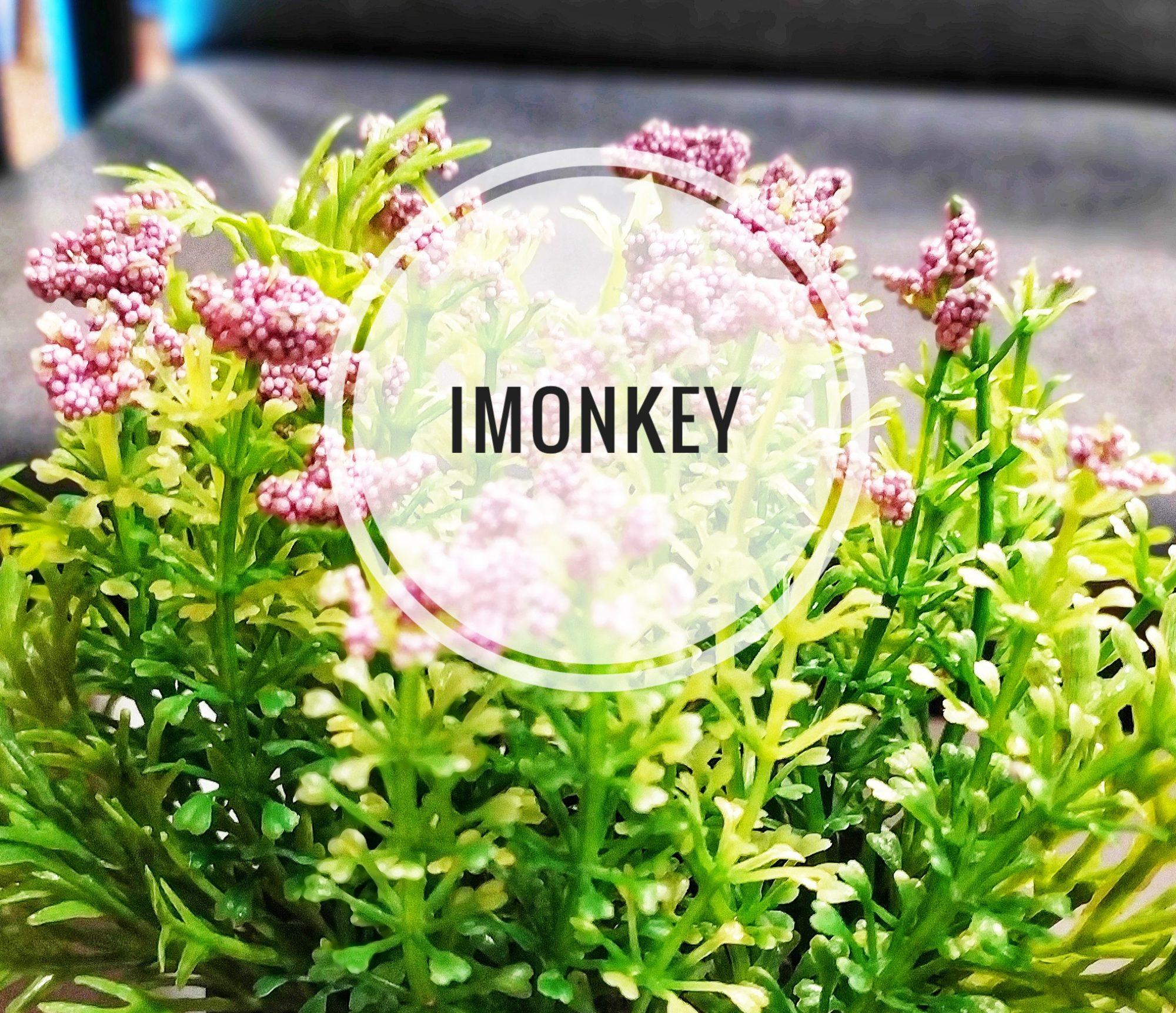 iMonkey.Blog